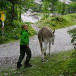 Esel an der Haindlkarhütte 1