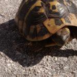 Schildkröte gerettet!