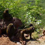 Die ersten Affen im Abbay Canyon