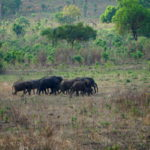 Elefantenherde im Mikumi NP