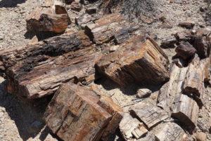 Verschteinertes Holz
